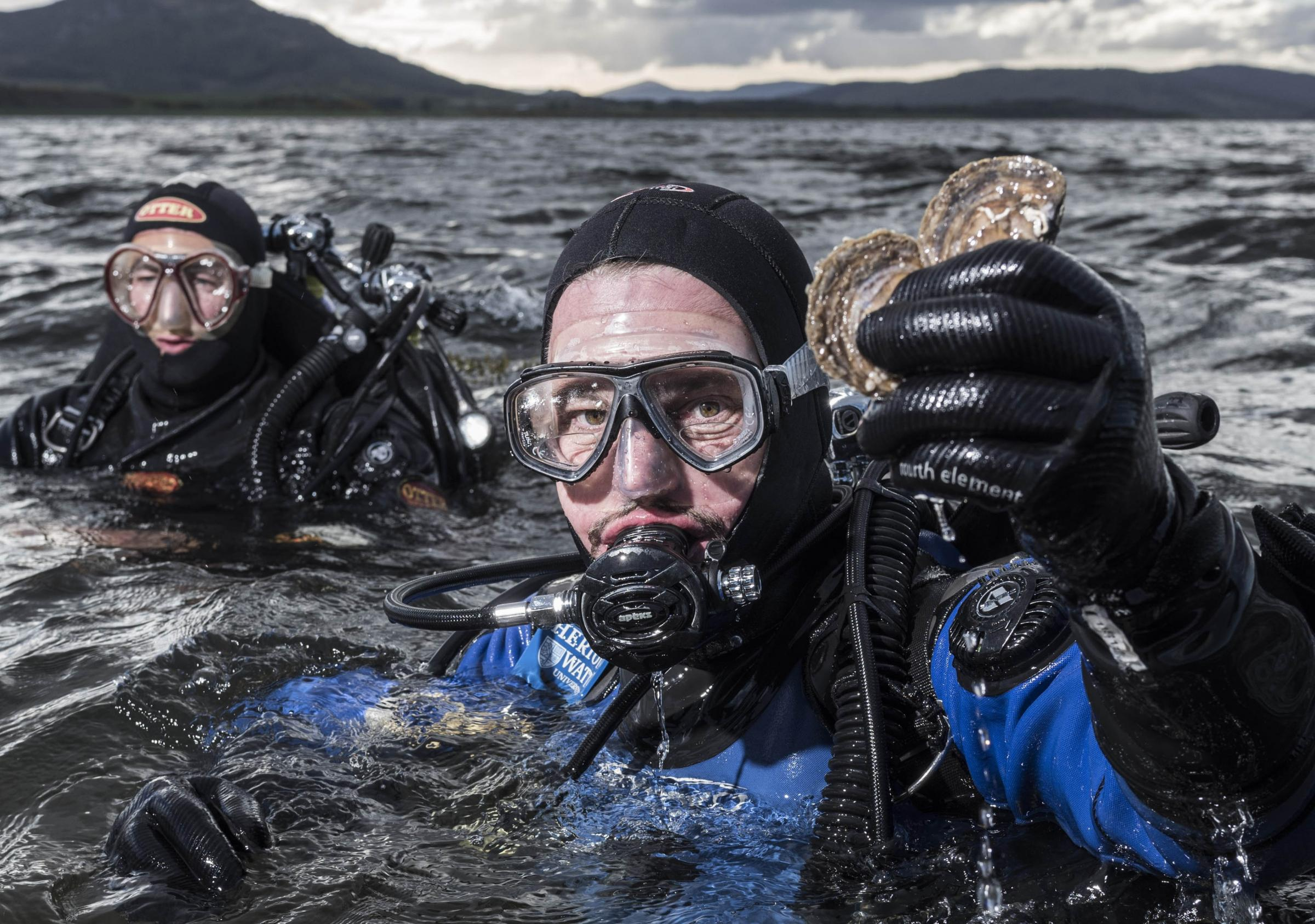 Go Firth and multiply: Dornoch oyster bed restoration to be copied in Europe