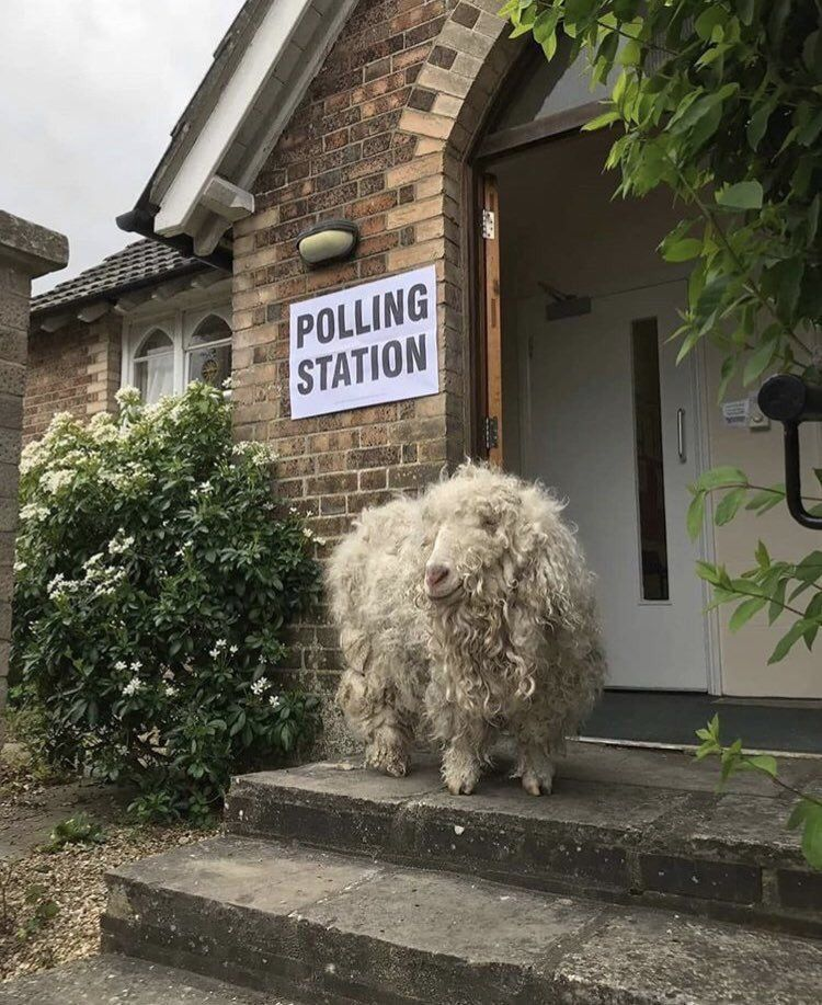 Photo taken from the Twitter feed of Dorset Council UK of a goat at a polling station in Dorset