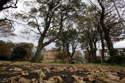 colour CHANGE: It looks more like autumn as the trees around Skelmorlie Castle in North Ayrshire turn brown, left, instead of the verdant green usually seen in June, as at Culzean Castle, right. heading FOR A FALL: The leaves on these trees in Largs have dried out in the gales and are dropping to the ground. Picture: Marc Turner