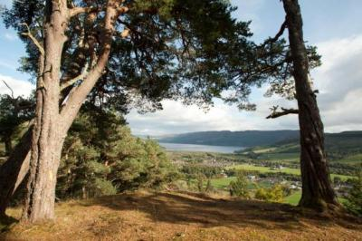 A stunning view over Loch Ness