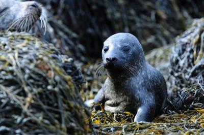The Scottish Information Commissioner has ruled against the Government's decision not to disclose the names of fish farms licensed to shoot seals