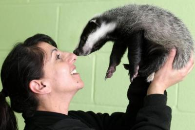 WILD AT HEART: Kaniz Hyat with badger cub Bramble, who was found unconscious when he was only a few weeks old.