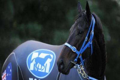 Black Caviar will be seeking her 22 consecutive win at Ascot on Saturday   Photograph: PA