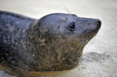 SEALS: Being nursed back to health.