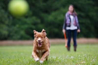TAKING THE LEAD: New rules will ensure pet owners keep their dogs under control and close at heel. Picture: Shutterstock/Rob van Esch